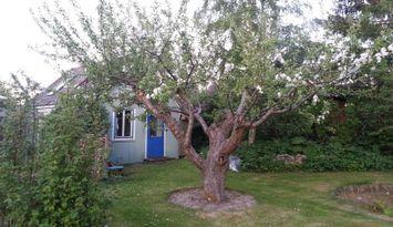 Mysig stuga/gårdshus på Österlen nära Kivik.