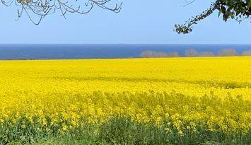 Österlen - fantastisk utsikt med fält och hav