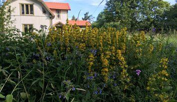 vackert hus med fin trädgård....
