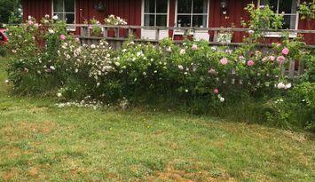Ferienhaus in Ränneslöv  Laholm. Golfplatz in nähe