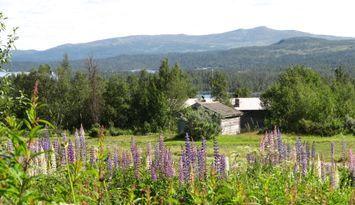 Naturnära boende på fäbodvall i Tänndalen